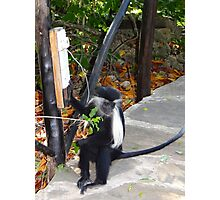 Electrical work - monkey power Photographic Print