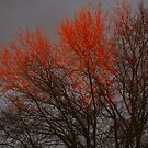 Burning tree before the storm by Ben Bugarach
