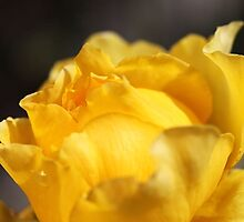 Yellow Royal Rose by Joy Watson