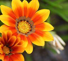 Happy Orange Flower by Kelly Walker