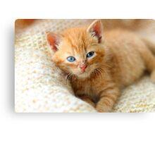 Kitten on blanket Canvas Print