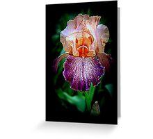 Vibrant Iris Flower Greeting Card