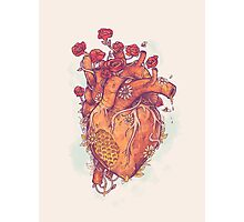 Sweet Heart Photographic Print