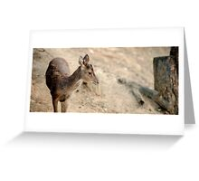 Deer outside during the day Greeting Card