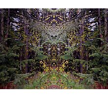 Forest Symmetry Photographic Print