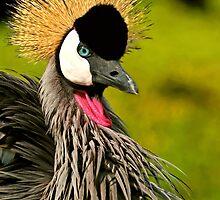 Crowned Crane by Anton Alberts