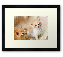 Curious kittens Framed Print