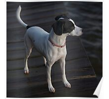 My dog Leica Poster