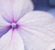 Purple pinwheel flower by SammyPhoto