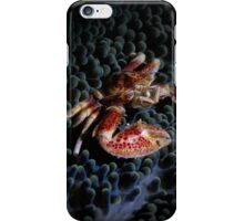 Porcelain crab iPhone Case/Skin