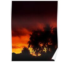 Weeping Tree Silhouette and Sunset 1 Poster
