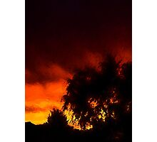 Weeping Tree Silhouette and Sunset 1 Photographic Print