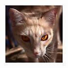 The Eyes of Raymond by Odille Esmonde-Morgan