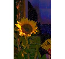 Sunflowers for Madonna Photographic Print