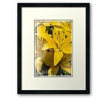 Summer Lilies Framed Print