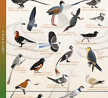 Proto-Birds Poster by panaves