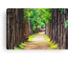 walking through metasequoia road Canvas Print