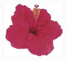 Beautiful Hibiscus by TScottAdams