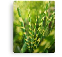 Yellow green zebra grass Canvas Print
