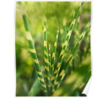 Yellow green zebra grass Poster