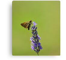 Butterfly Lavander Canvas Print