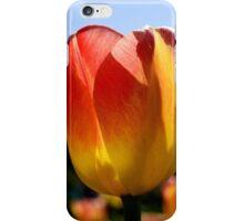 tulip 1 iPhone Case/Skin