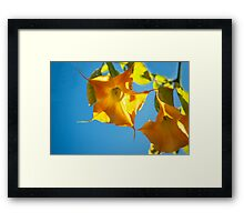 Yellow brugmansia, Yellow flower, Floral Photography, Nature,  Framed Print