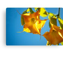 Yellow brugmansia, Yellow flower, Floral Photography, Nature,  Canvas Print