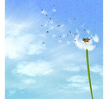 Dandelion Blue Sky Nature Illustration Photographic Print