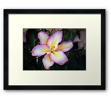 The Art OF Lily Framed Print