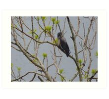 Bird sheltering in a tree in the rain Art Print