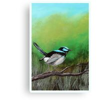 The Superb Blue Wren Canvas Print