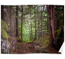 Chilkoot Trail in Rainforest Poster