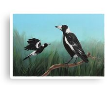 Australian Magpies Canvas Print