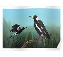 Australian Magpies Poster