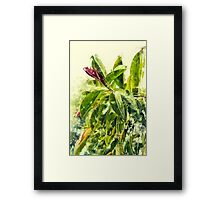Rubber tree AKA Rubber fig (Ficus elastica) Digitally Manipulated Framed Print