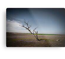 A dried up dead tree Negev desert, Israel.  Metal Print
