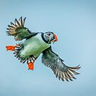 Puffin's Landing by vivsworld