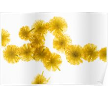 Back lit Flower petals photographed on a light box Poster