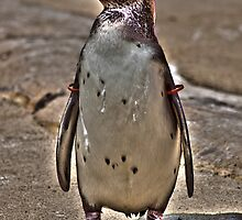 Gold Star Penguin by karasutherland