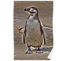 Gold Star Penguin Poster