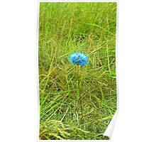 Flower and green gras Poster