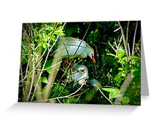 Hidden Deep in the Brush Baby Cattle Egret Greeting Card