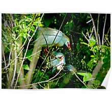 Hidden Deep in the Brush Baby Cattle Egret Poster