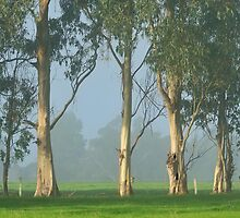 Treeline on the Farm by metriognome