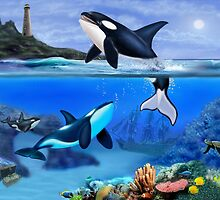 THE ORCA FAMILY by GLENN HOLBROOK