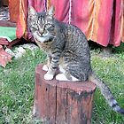 Mishu on his Posing Plinth by Dennis Melling