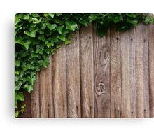 Ivy on boards Canvas Print