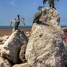 Morecambe Cormorants by Tom Gomez