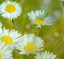Among the Wildflowers Sticker